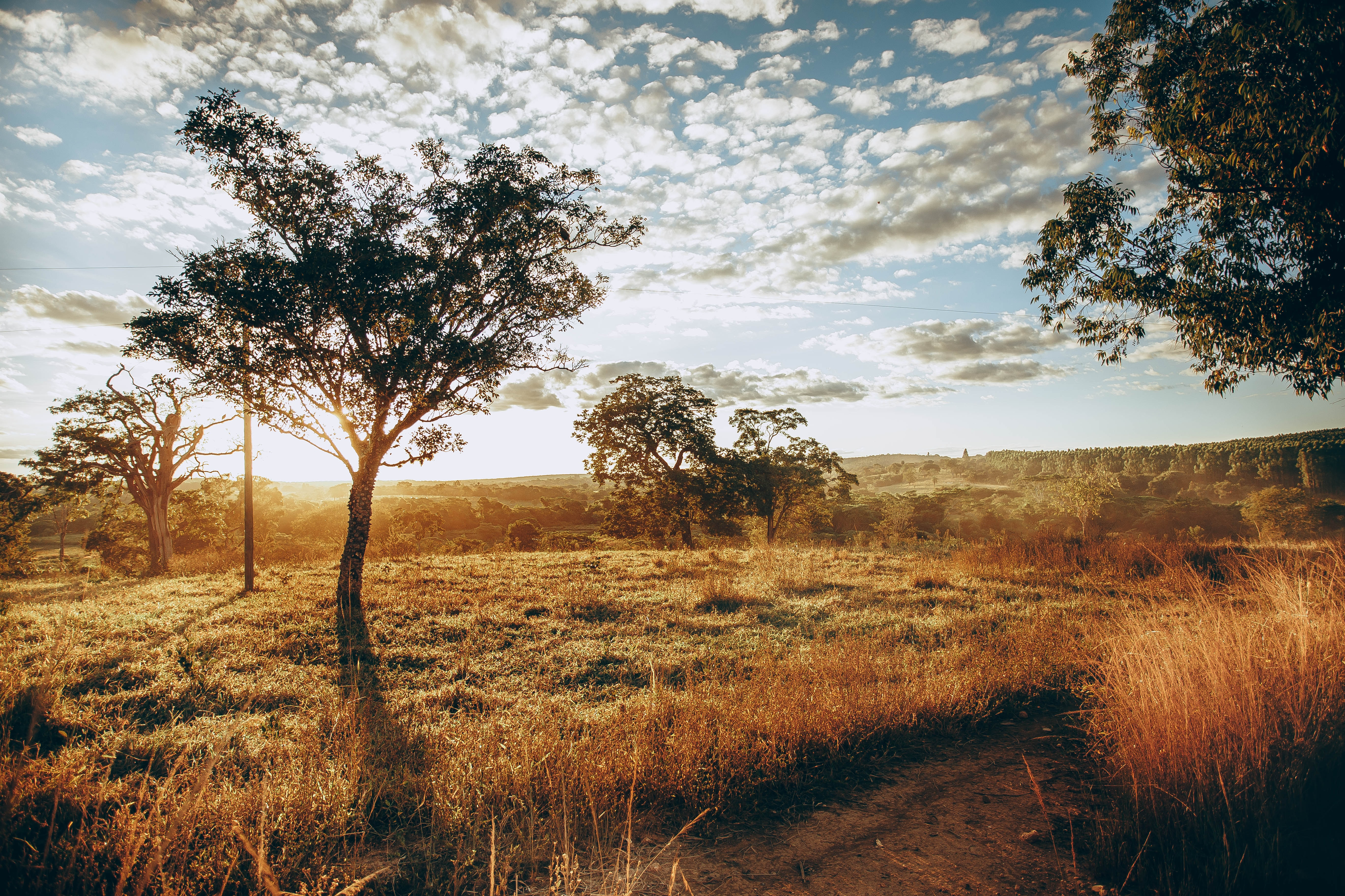 image of savanna